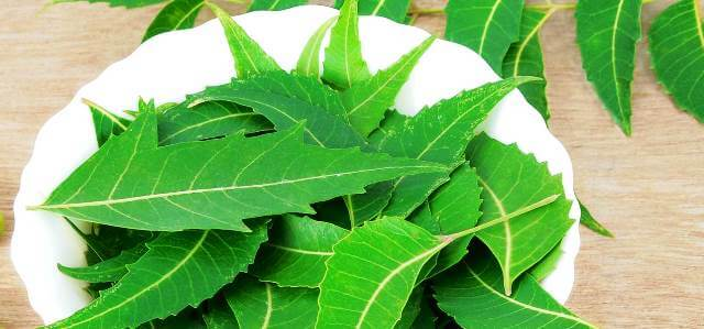 Neem To Regrow Hair