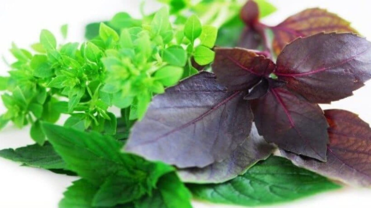 Causticum Herb : Health Benefits,Uses,Side Effects