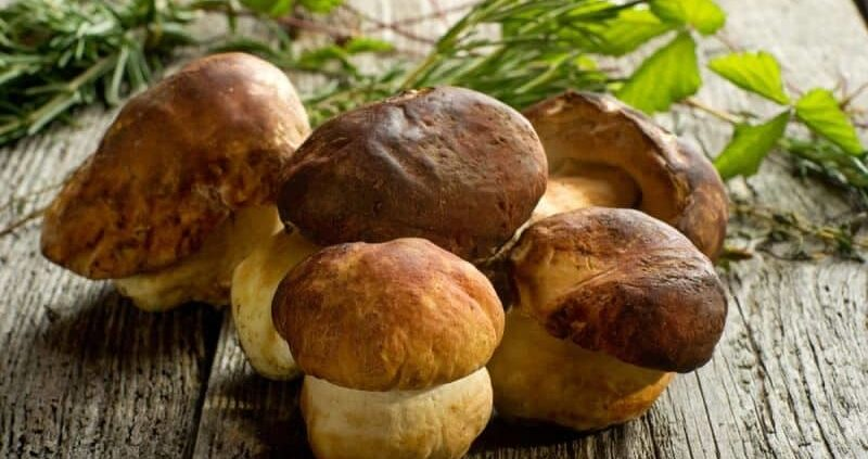 Shiitake Mushroom: Unique Blend Of Taste And Health