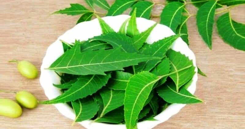 DIY Homemade Neem Clove Tooth Powder : 8 Reasons To Try For