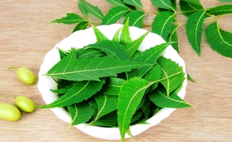 Help on essay neem tree