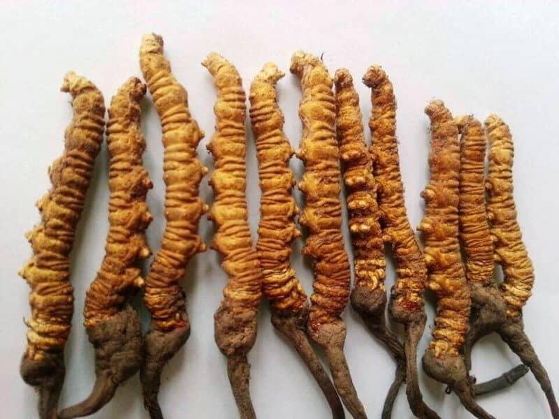 herbs pregnancy