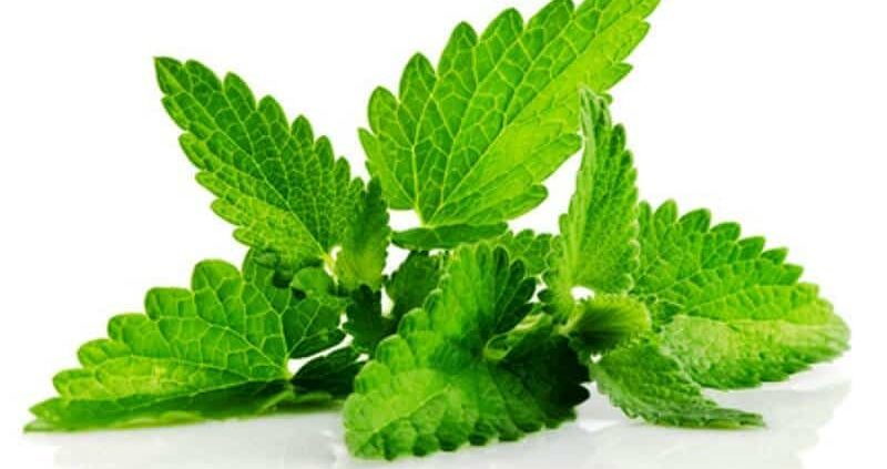 Health Benefits Of Patchouli Essential Oil
