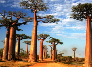Health Benefits Of Baobab Oil