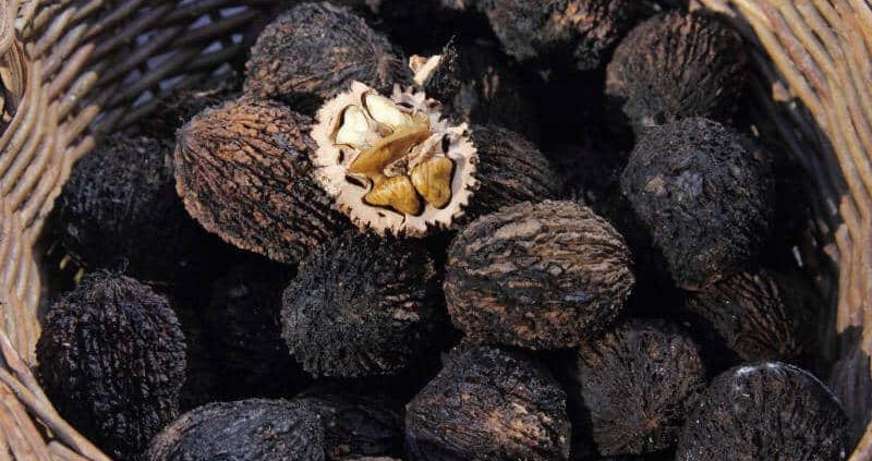 Health Benefits Of Black Walnuts