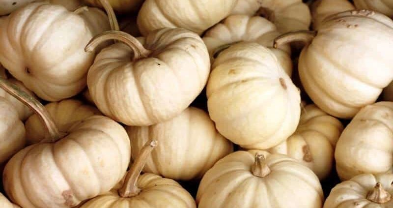 18+ Proven Health Benefits & Uses Of White Pumpkin