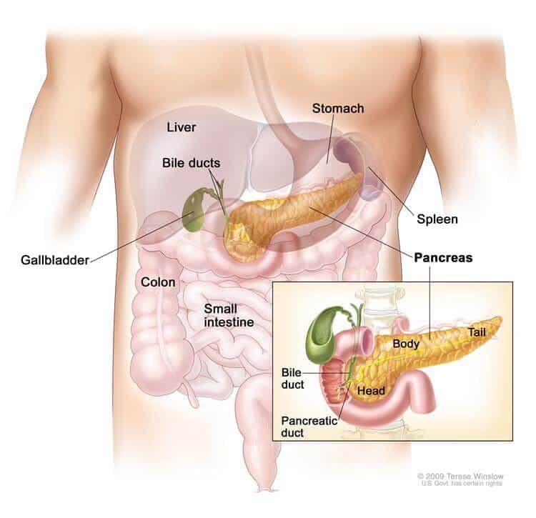 Functions of Pancreas