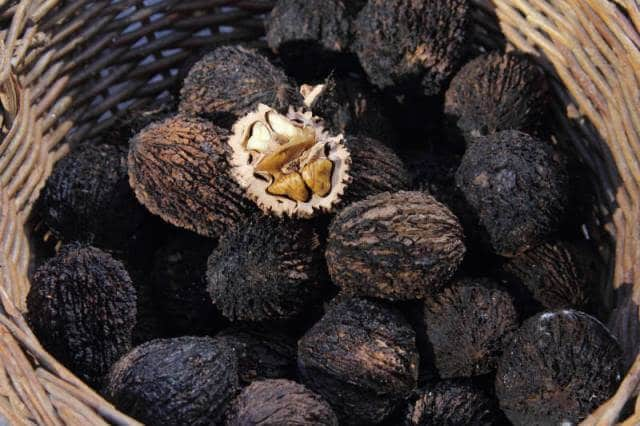 Black Walnuts To Treat Thrush