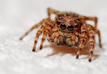 22 Best Natural Remedies To Get Rid Of Spiders