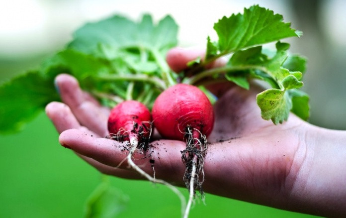 Discover 29 Health Benefits Of Eating Radish
