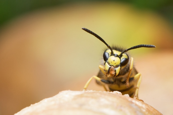 Home Remedies To Get Rid Of Wasp Sting Swelling
