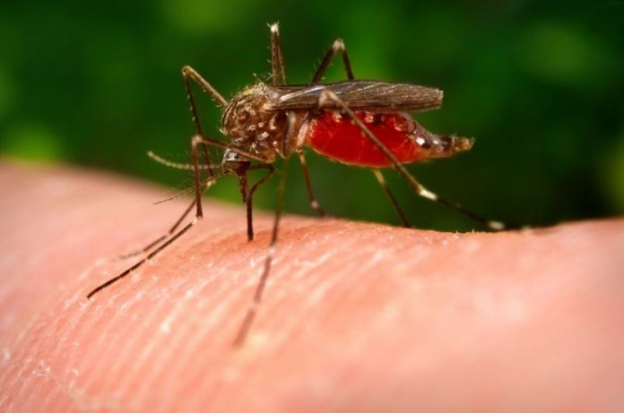 How To Get Rid Of Mosquito Bites Fast Home Remedies