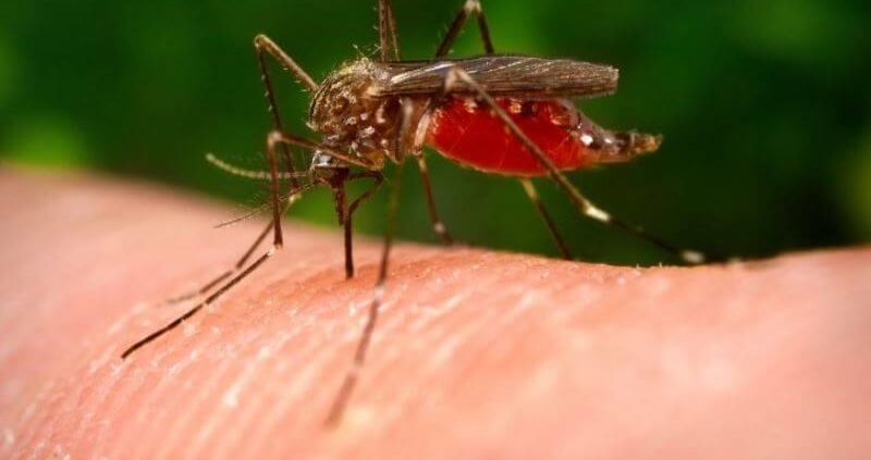 20 Proven Home Remedies To Get Rid Of Mosquito Bites Fast