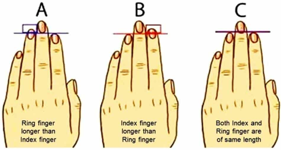 Things Your Finger Length Reveals About Your Personality