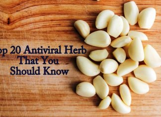 Top 20 Antiviral Herb That You Should Know