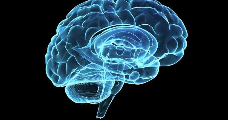 A Severe Head Injury May Increase Of Parkinson's Disease Later On