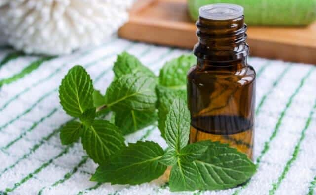 Peppermint-essential-oil.