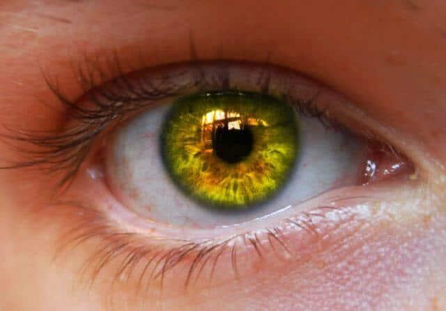 Hazel of eyes meaning the Hazel Eyes:
