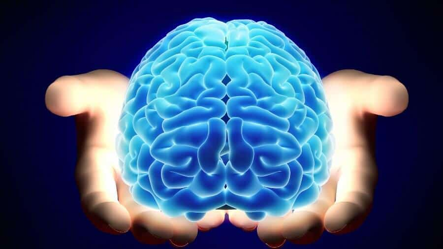 Central Sulcus Everything You Should Know About It