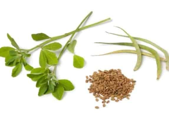 Fenugreek plant