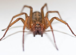 Hobo Spider Bite Pictures,Symptoms, and Treatments.