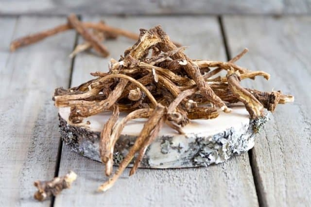 Dandelion root for blood purification