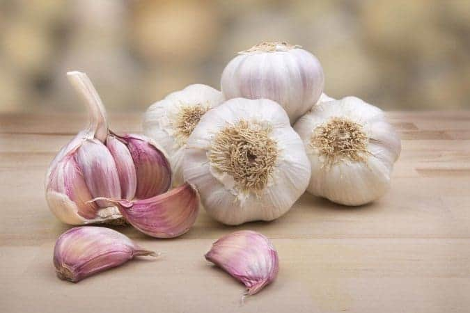 Garlic for blood purification