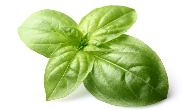 How To Remove Warts Using Basil
