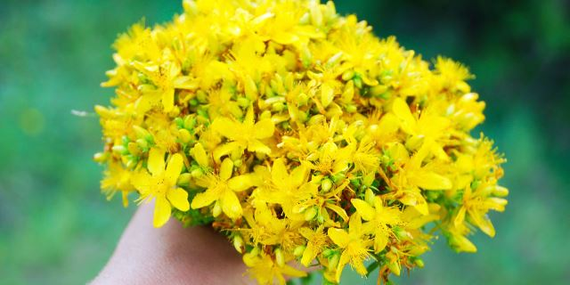 John's Wort Get Rid Of Panic Attacks