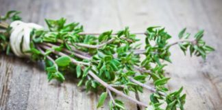 Thyme Uses,Health Benefits & Side Effects That You Should Know