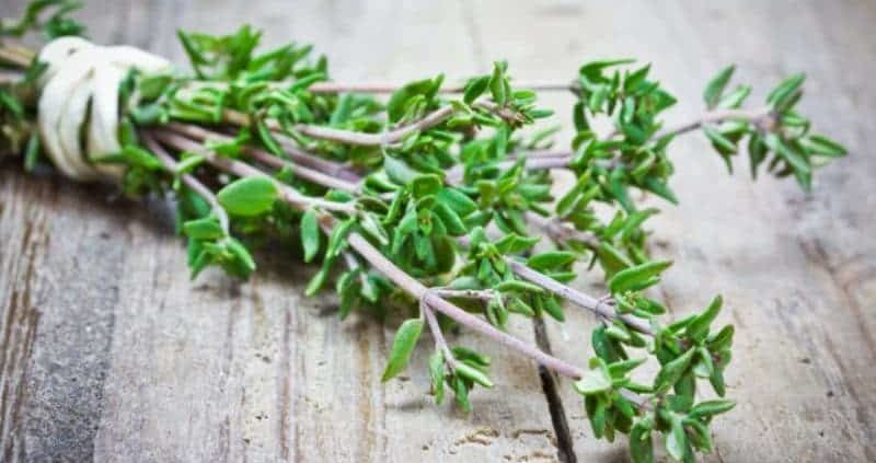 Thyme : 14 Health Benefits + Side Effects