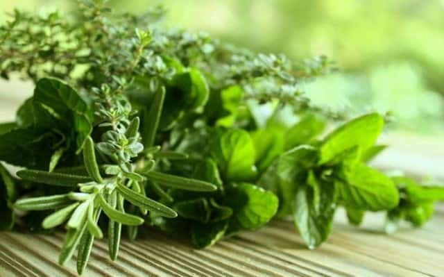 12 Powerful Herbs To Dissolve Uric Acid In A Effective Way