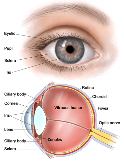 Causes of sclera