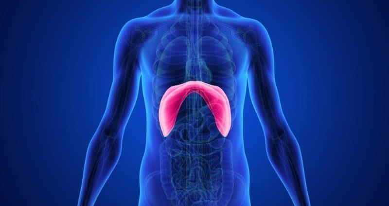 Diaphragm Spasms : Causes, Symptoms, Treatment