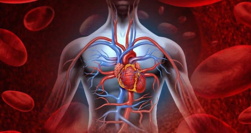 How To Improve Blood Circulation In The Body?