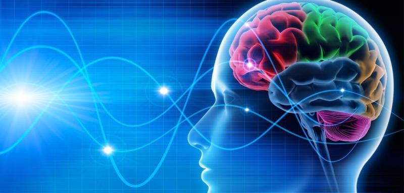 Shankhpushpi : Health Benefits,Usage & Side Effects