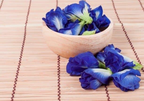 Shankhupushpi flowers for making the tonic