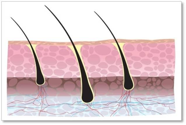 Strengthens hair follicle