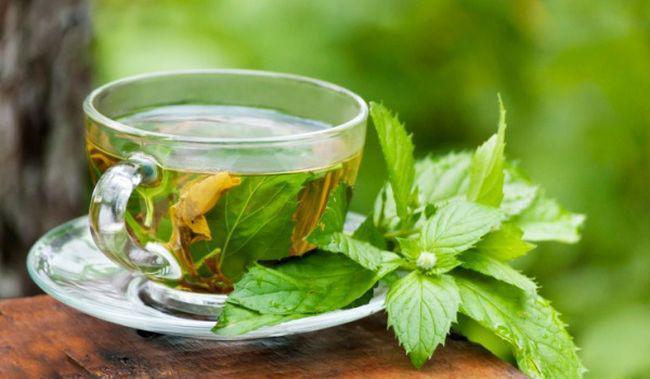 Insulin Leaves Steeping for making tea