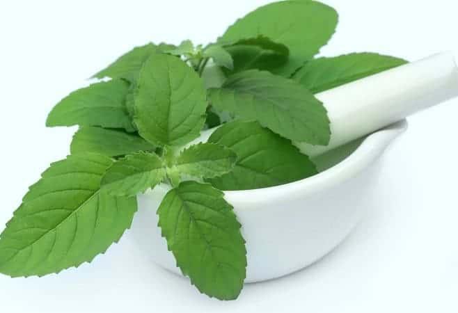 Tulsi leaves for Chikungunya