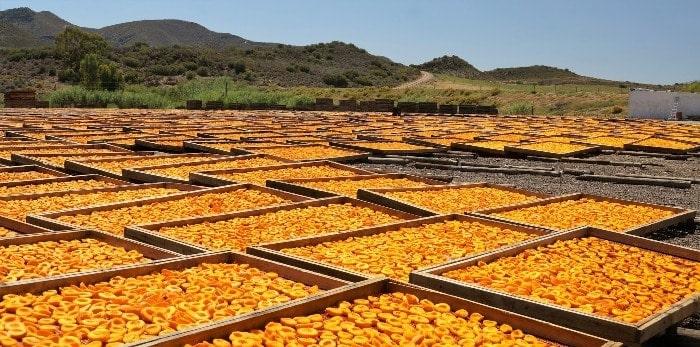 Drying food in sun