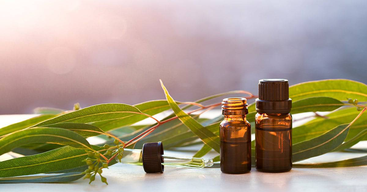 Eucalyptus oil for chronic mucus