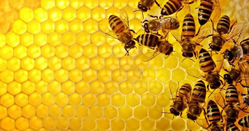 13 Proven Health Benefits Royal Jelly For Men, Women, Skin