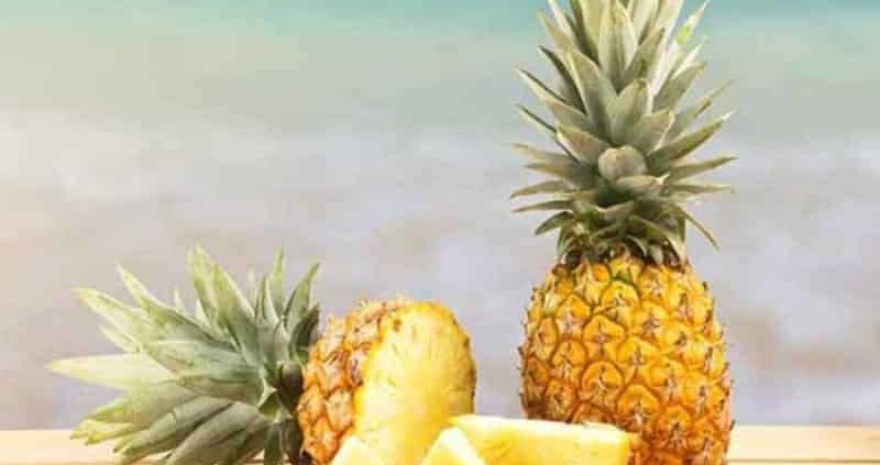 Can Dogs Eat Pineapple? Find It Out