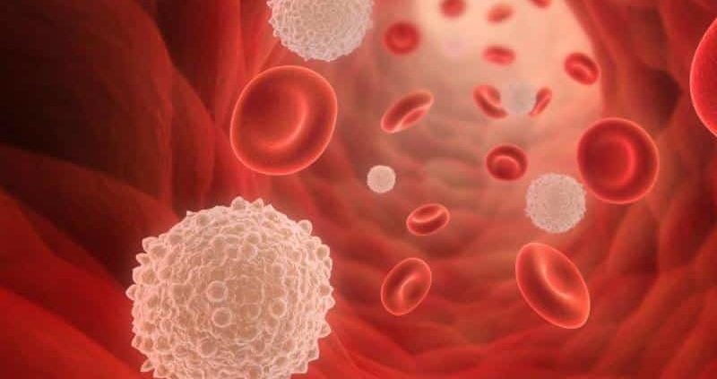 10 Effective Home Remedies To Increase White Blood Cells