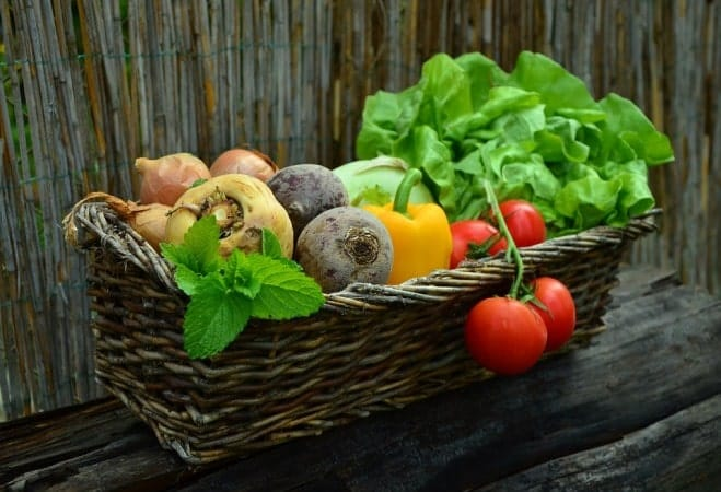 Opt For Plant Items To Gain Protein