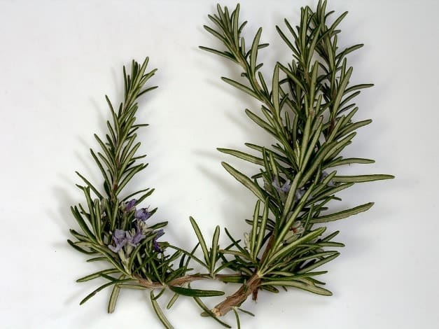 Rosemary essential oil for shaky hands