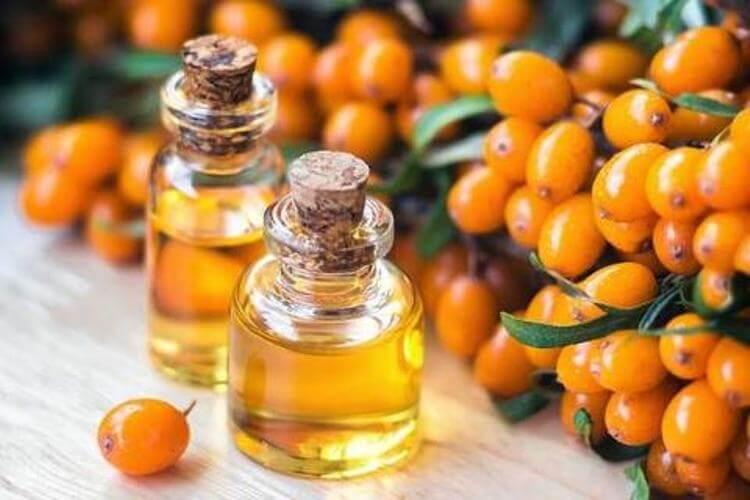 Sea Buckthorn Oil: Benefits, Classification, Nutritional value, Properties