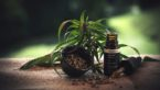 "A Look Into The Validity Of The CBD Health Market: ""Does CBD Work?"