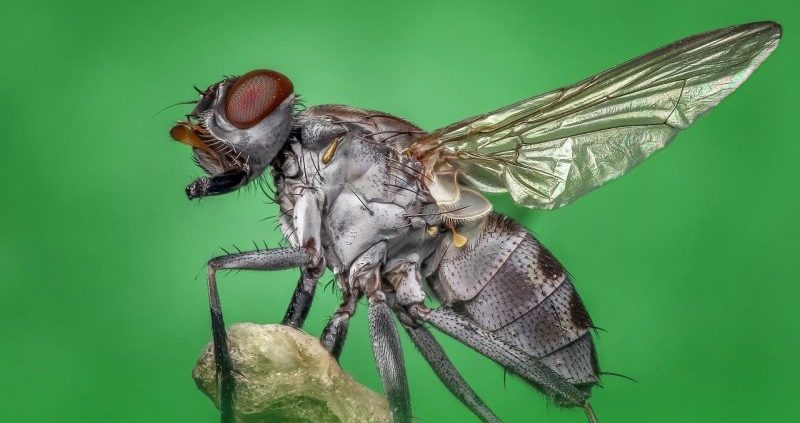 5 Common Pests and the Dangers They Can Carry